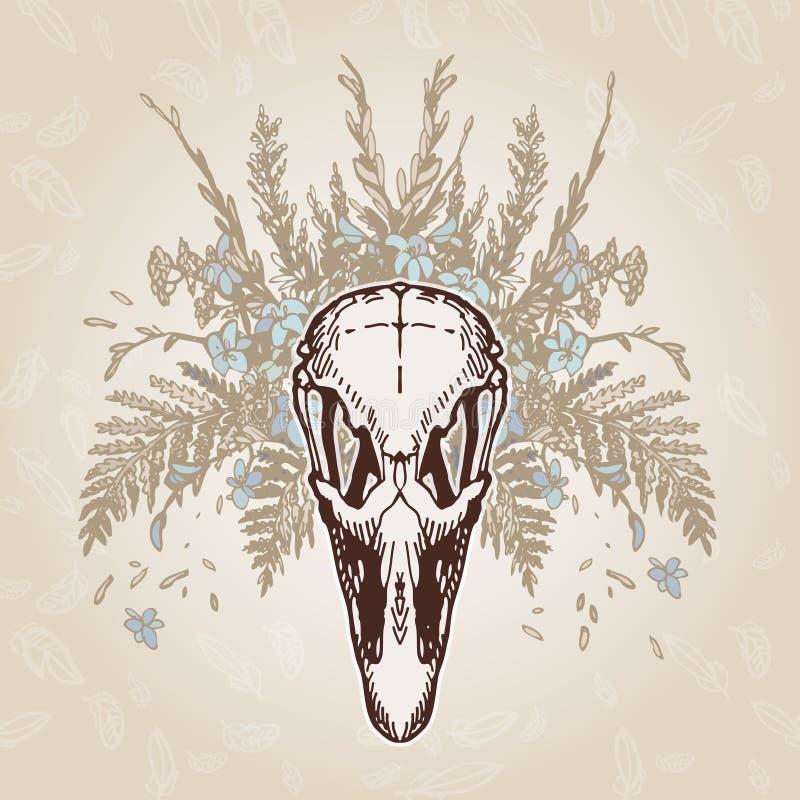 Оперение черепа страуса постаретое годом сбора винограда стоковое изображение rf