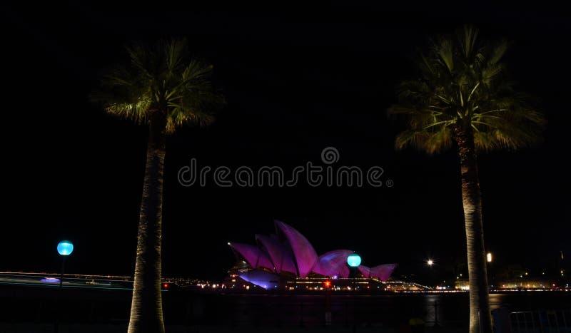 Оперный театр Сиднея между пальмами загоренными с красочным светом стоковое изображение rf