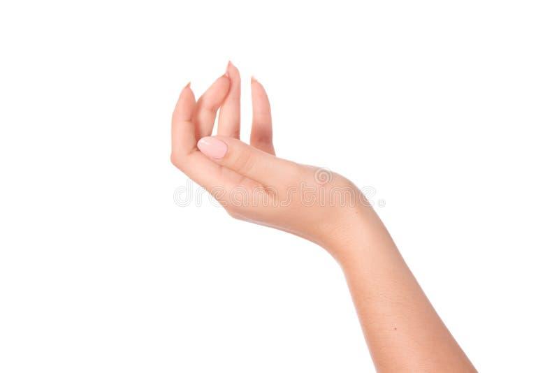 Опорожните открытую руку женщины стоковое фото rf