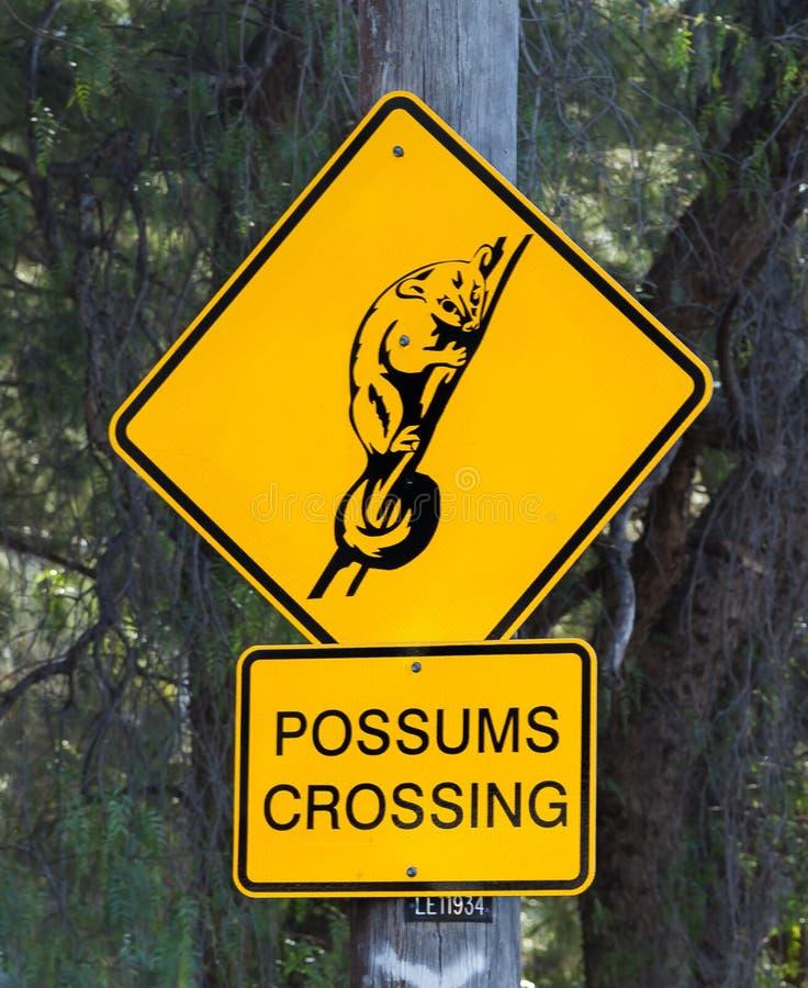 Опоссумы пересекая знак стоковое изображение rf