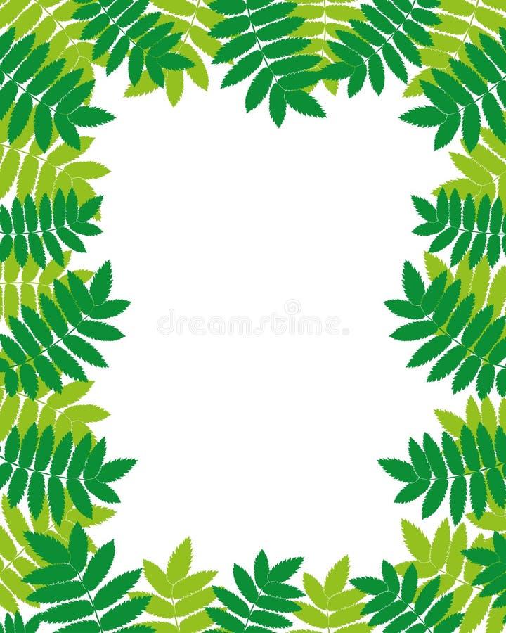 дополнительный иллюстратор рамки формы eps самана включает вектор листья бесплатная иллюстрация