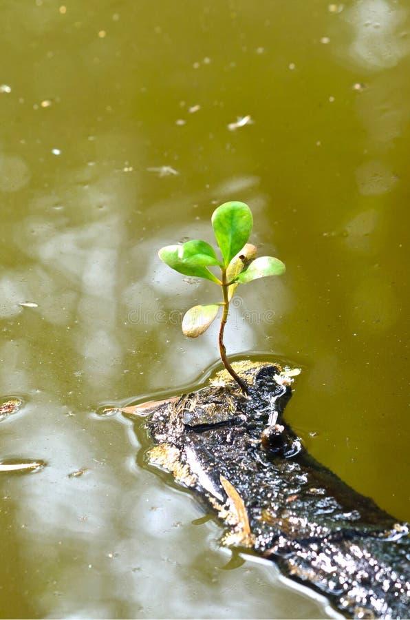 Определите зеленые лист на сухой ветви в нечистотах стоковые изображения rf