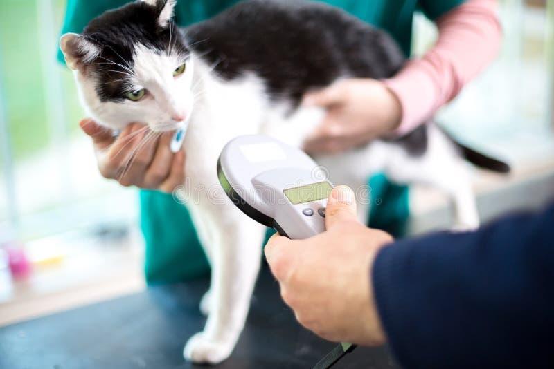 Определять кота с прибором микросхемы стоковые фото