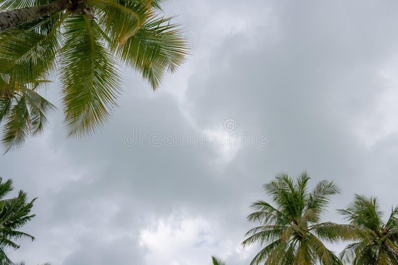 Опрокинутые пальмы кокоса на предпосылке неба стоковые изображения