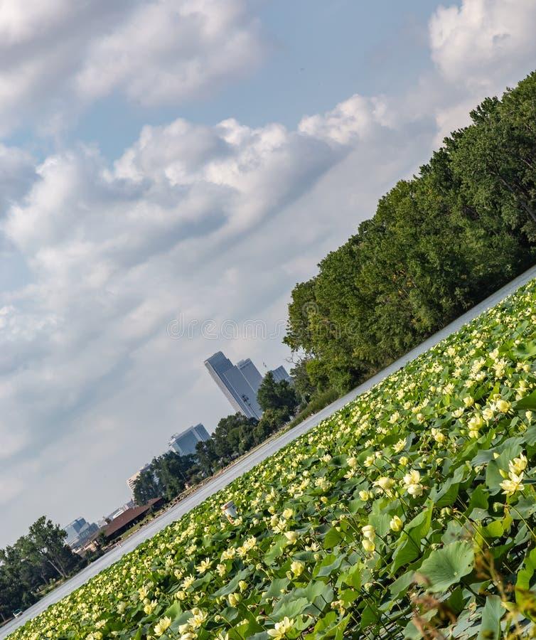 Опрокинутый взгляд горизонта Омахи городского с лилией воды на озере Айове Картер стоковое изображение