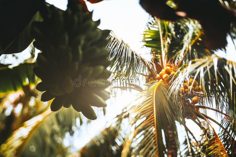 Опрокиньте взгляд переноса ладони кокосов и зеленых бананов стоковое фото rf