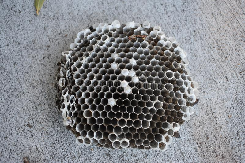 Опущенные оси гнездятся на Boise Гринбелт стоковое фото rf