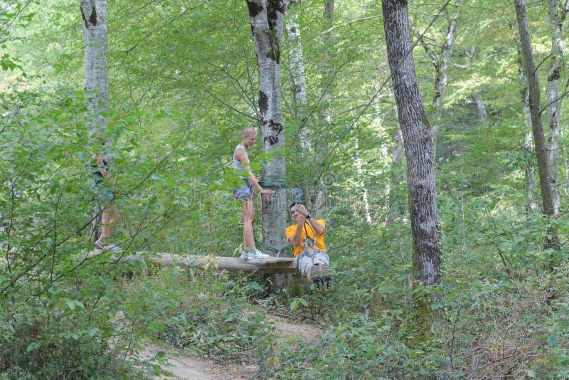 Опыт zipline дерева стоковые изображения rf