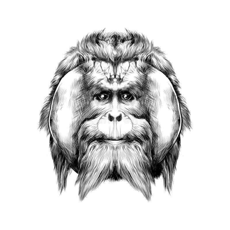 Орангутан иллюстрация штока