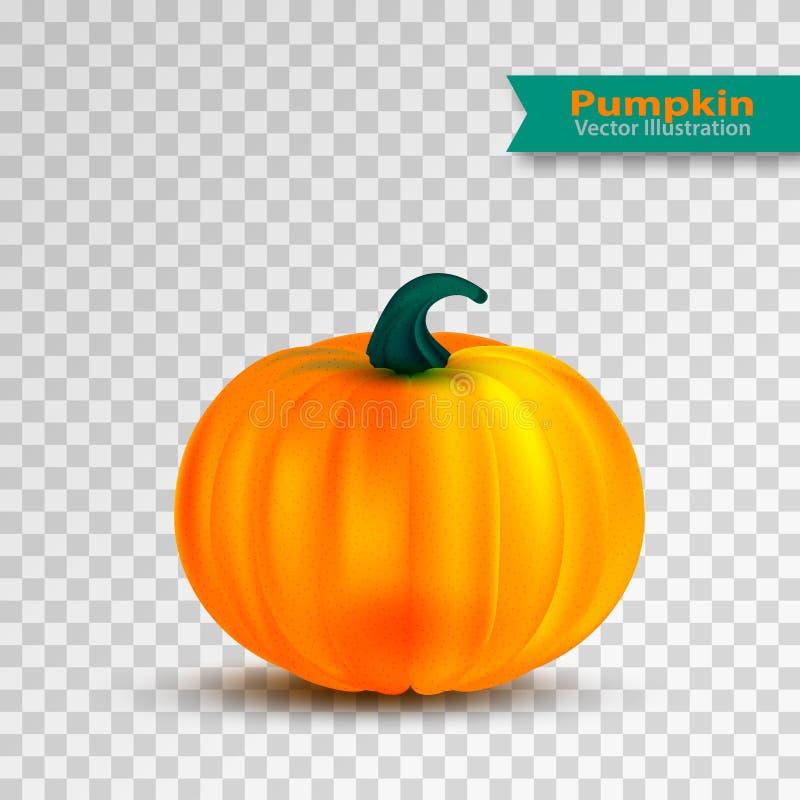 Оранжевая иллюстрация вектора тыквы Осень хеллоуин или тыква благодарения, vegetable графический значок изолированный дальше иллюстрация вектора