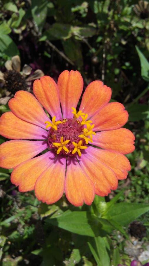 Оранжевая и розовая красота стоковые изображения rf