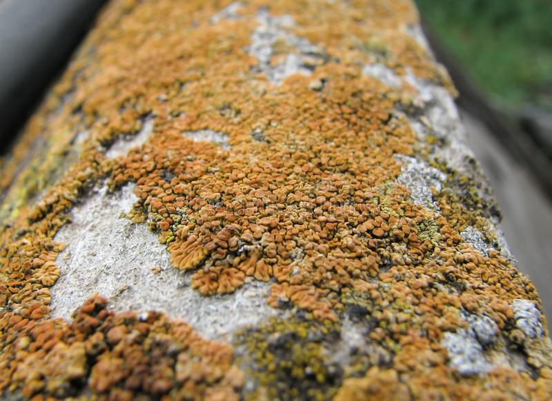 Оранжевая колония грибного конца-вверх стоковая фотография