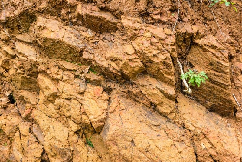 Оранжевая почва глины стоковая фотография