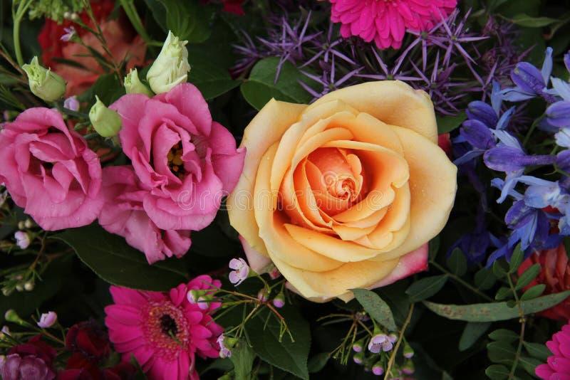 Оранжевая роза пинка стоковые изображения