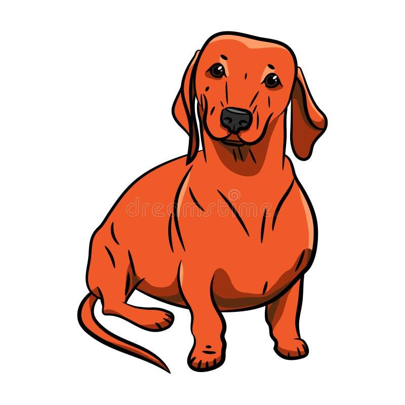 Оранжевая собака руки-drawnDachshund Реалистично покрашенная такса Иллюстрация vecktor запаса o Значок сердца с иллюстрация штока