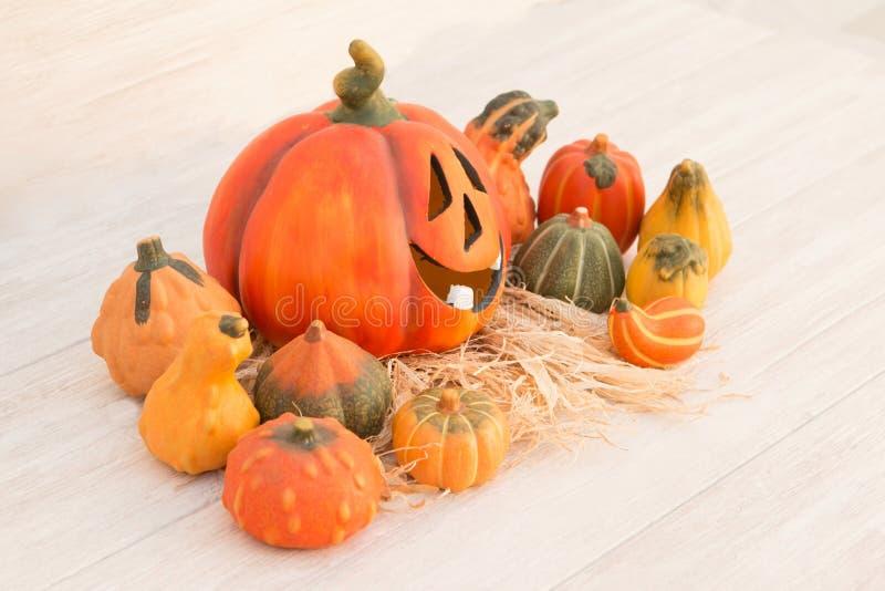 Оранжевая тыква хеллоуина и много малых тыкв стоковые фото