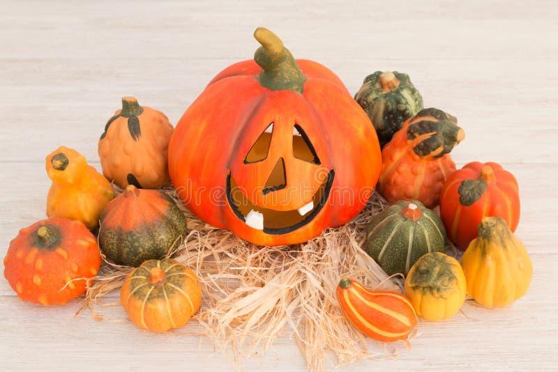 Оранжевая тыква хеллоуина и много малых тыкв стоковые изображения rf