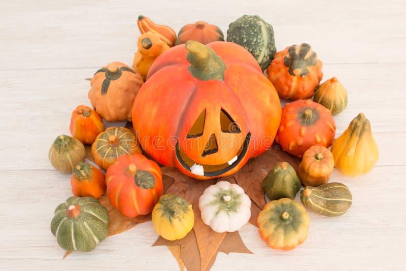 Оранжевая тыква хеллоуина и много малых тыкв стоковое изображение rf