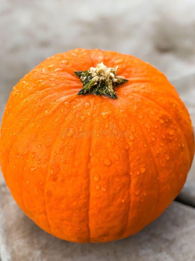 Оранжевая яркая тыква с капельками воды стоковая фотография