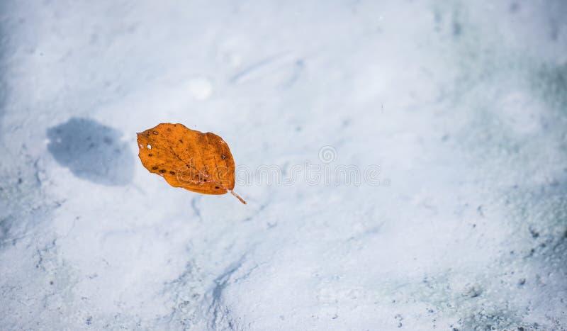 Оранжевые заплывы лист в открытом море реки, экземпляра стоковое фото rf