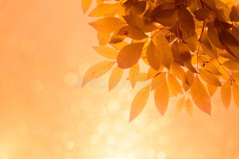 Оранжевые лист на ветвях и мягкое оранжевое bokeh резюмируют предпосылку стоковое фото rf