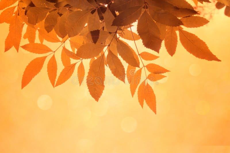 Оранжевые лист на ветвях и мягкое оранжевое bokeh резюмируют предпосылку стоковая фотография