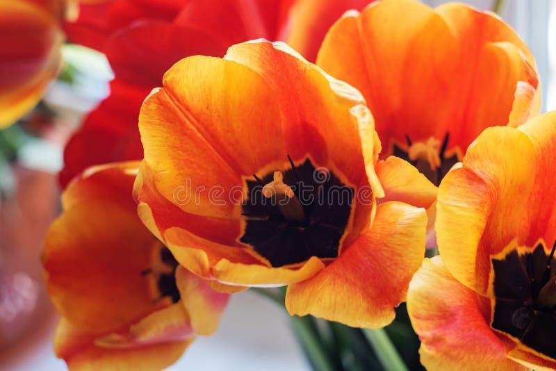 Оранжевые и красные тюльпаны на flowerbed, предпосылке стоковые изображения rf
