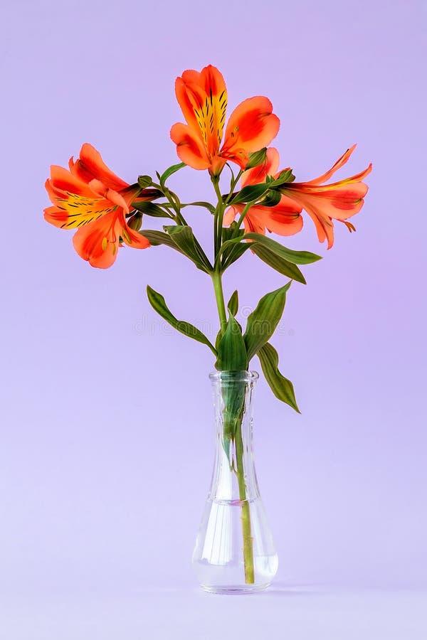 Оранжевые покрашенные цветки alstroemeria, обыкновенно вызывали перуанскую лилию или лилию Incas в небольшой прозрачной стеклянно стоковые изображения