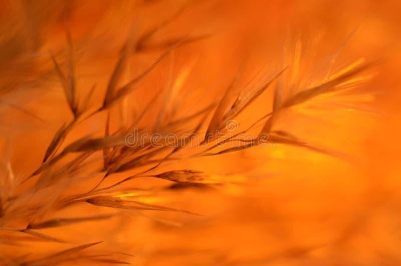 Оранжевые тени на оранжевой предпосылке стоковое фото