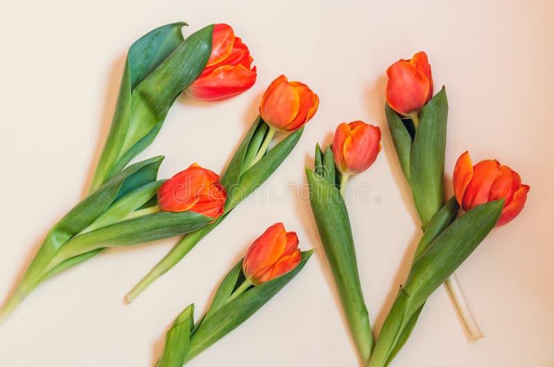 Оранжевые тюльпаны на бежевой предпосылке стоковая фотография rf