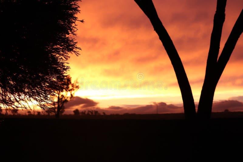 Оранжевый заход солнца с деревом стоковые изображения