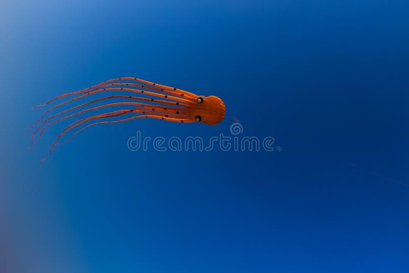 Оранжевый змей Octupus стоковые изображения rf