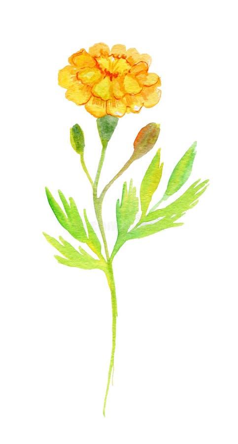 Оранжевый изолированный ноготк изображение иллюстрации летания клюва декоративное своя бумажная акварель ласточки части бесплатная иллюстрация