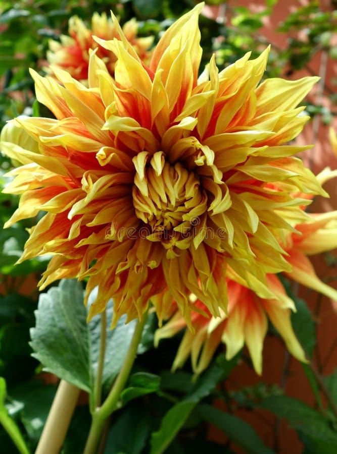 Оранжевый и желтый конец цветка вверх стоковая фотография rf