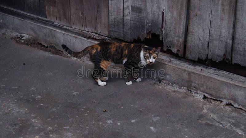 Оранжевый и черный котенок с серым backgroud тона стоковые фотографии rf