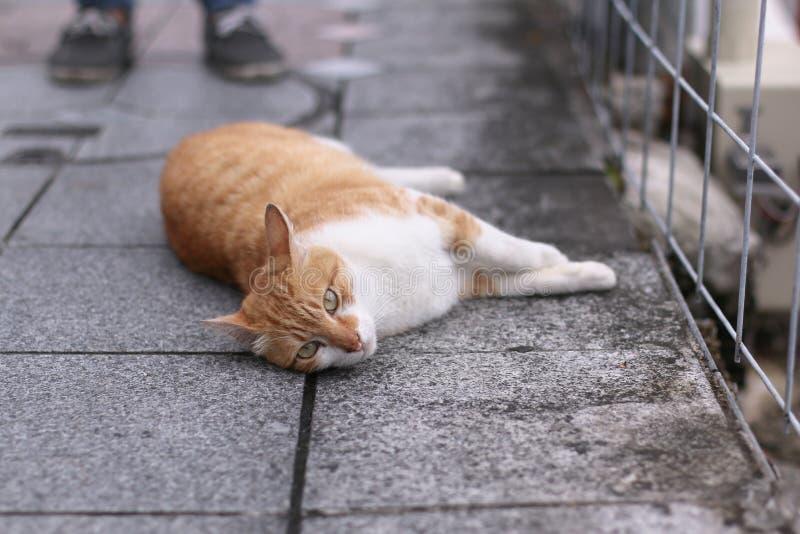 Оранжевый кот кладя вниз с улицы дороги стоковые фото