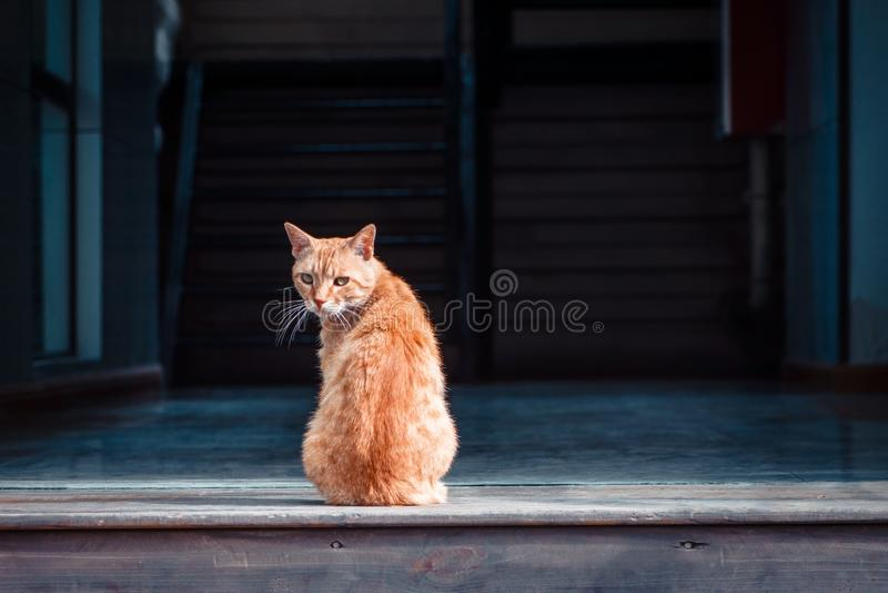 Оранжевый кот на двери стоковое фото