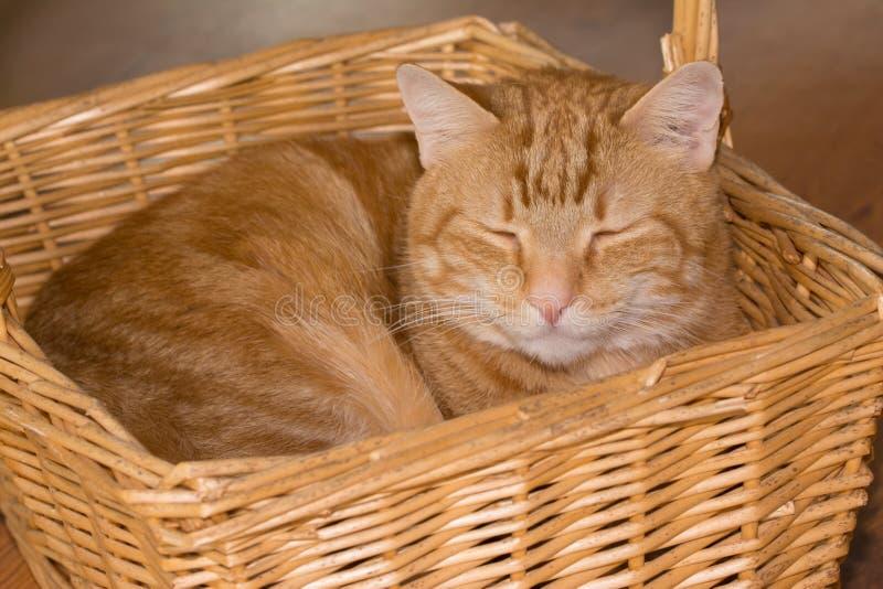 Оранжевый кот tabby в плетеной корзине стоковые изображения rf