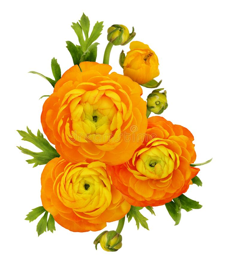 Оранжевый лютик цветет состав стоковые фотографии rf