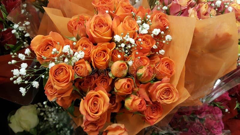 Оранжевый пук поднял стоковая фотография rf