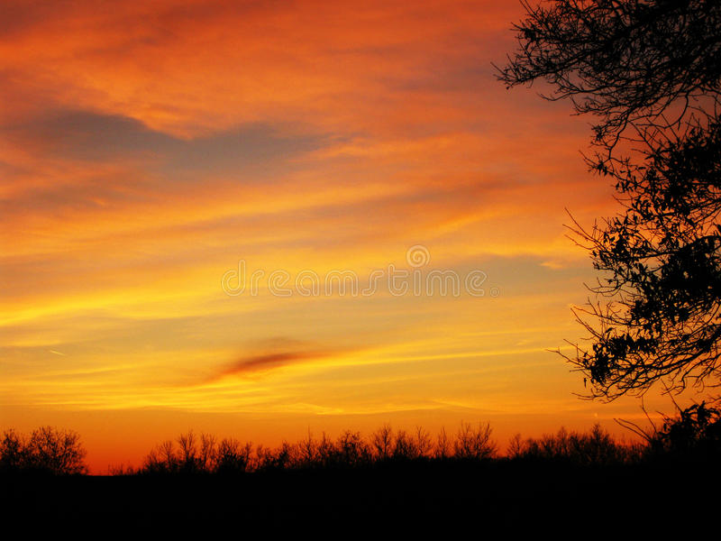 Оранжевый силуэт дерева захода солнца стоковое фото rf