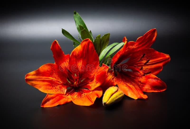 Оранжевый цветок лилии на темной предпосылке стоковые фото
