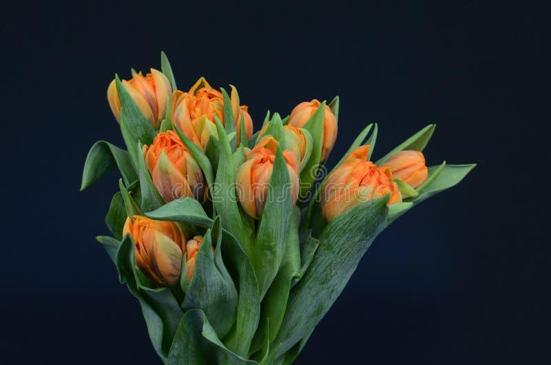 Оранжевый цветок тюльпана для предпосылки стоковые изображения rf