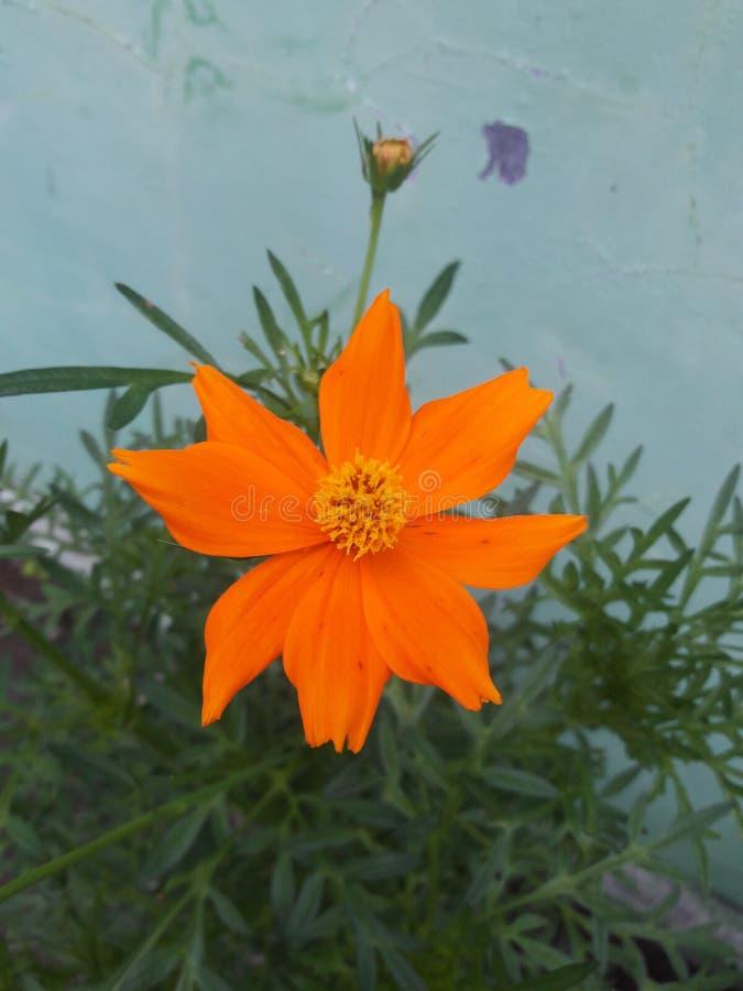 Оранжевый стоковое фото rf