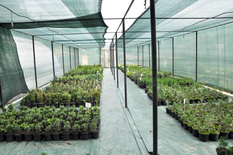 Оранжерея для растя саженцев орнаментальных кустов и деревьев стоковые фотографии rf
