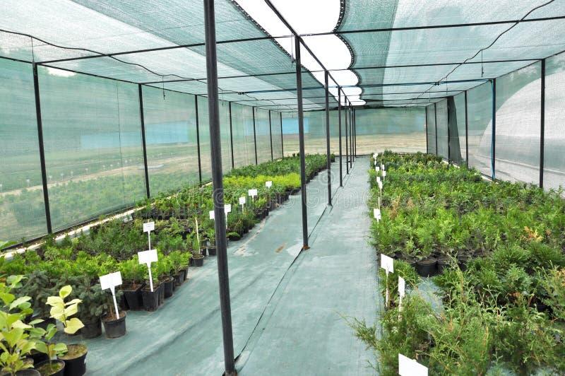 Оранжерея для растя саженцев орнаментальных кустов и деревьев стоковые изображения rf