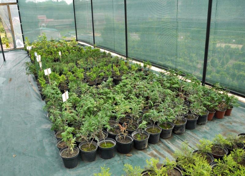 Оранжерея для растя саженцев орнаментальных кустов и деревьев стоковое фото rf