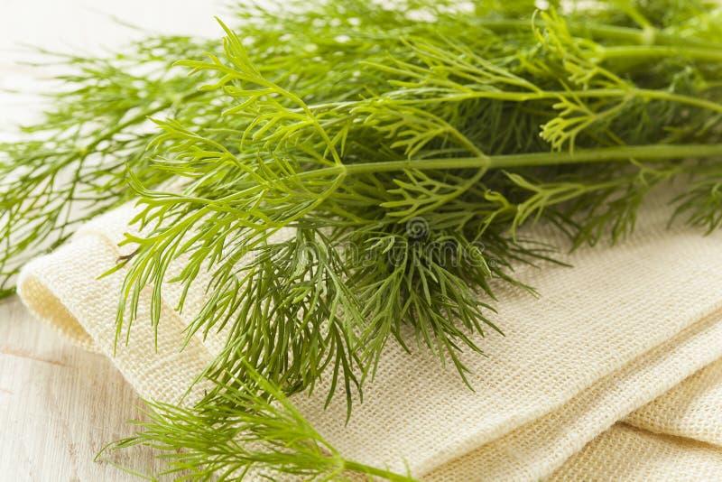 Органическая зеленая трава укропа стоковые фото