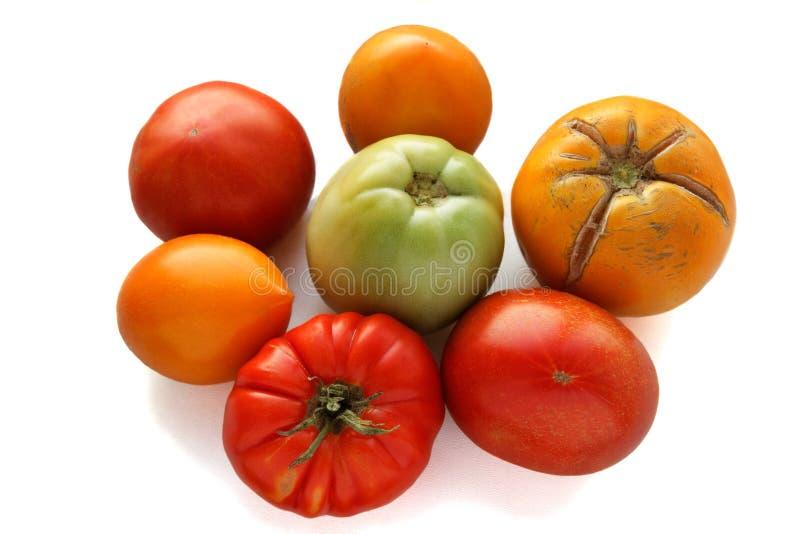 Органическая концепция томатов - красный цвет; зеленый и желтый на задней части белизны стоковые фотографии rf