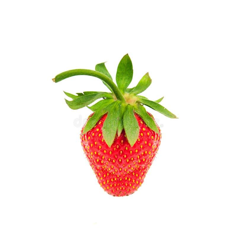 Органическая свежая зрелая ягода клубники при листья изолированные на белой предпосылке Здоровые плодоовощи, vegaterian еда close стоковое изображение rf